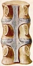 ligament rug