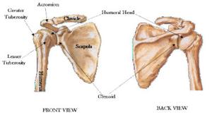 schouderpijn uitstraling naar arm