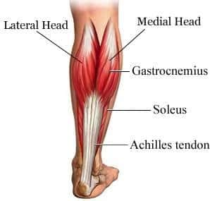 achilles tendonitis injury |stretching exercises treatment, Human Body