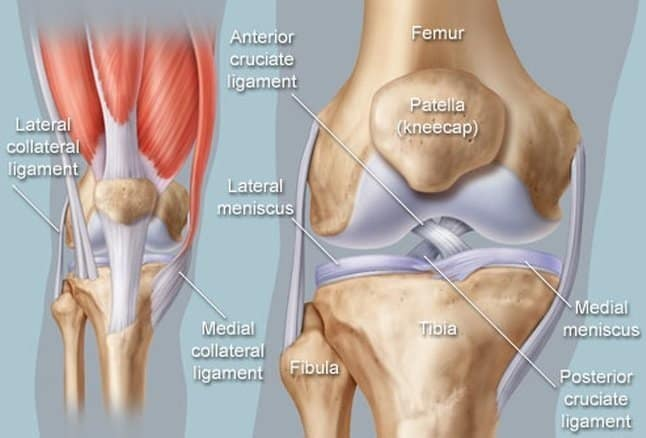 Left knee muscle diagram diy enthusiasts wiring diagrams knee pain all causes and treatments with home exercises rh alwaysfysio nl left leg knee diagram diagram of leg below knee ccuart Choice Image
